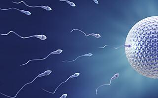 Gravid uke 3