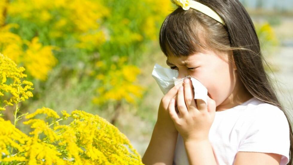 POLLENALLERGI ELLER FORKJØLELSE: Rennende nese er et tydelig symptom på allergi, men kan også være en forkjølelse. Foto: NTB scanpix
