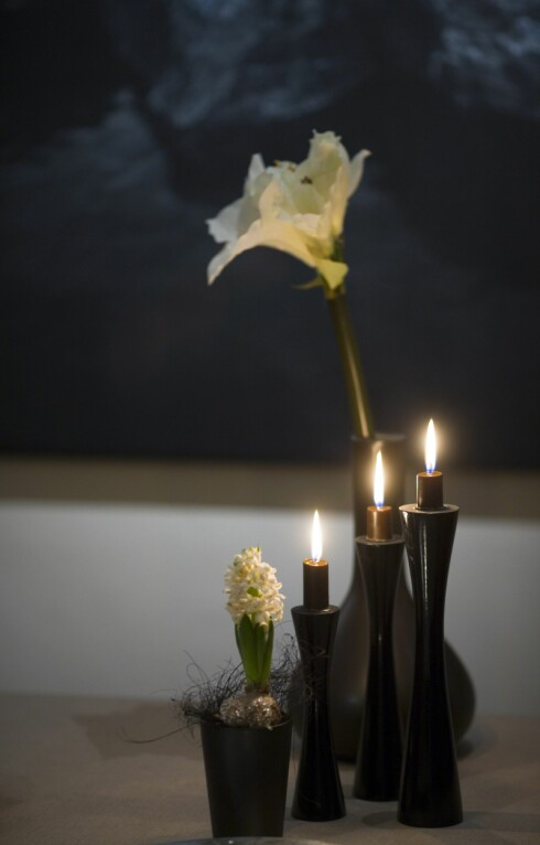 USKYLDIG PYNT?: Svibler kan være både flott og dekorative, men de er samtidig blant blomstene allergikere ofte reagerer på.  Foto: Samfoto/NTB Scanpix