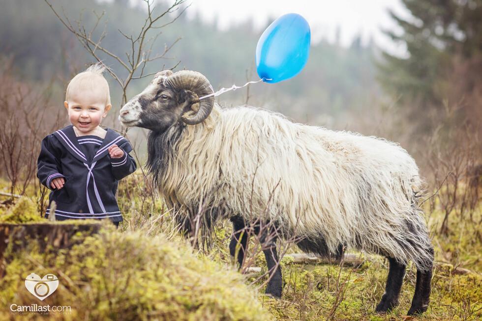 MORSOMT ETTÅRSBILDE: – Jeg drar ofte ut på location for å fotografere småbarn. Lite visste jeg at denne gutten var bestevenner med villsauene som beitet rundt huset han bor i, sier Camilla. Foto: Fotograf Camilla Smistad Tofterå