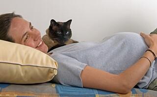 Kan man ha katt når man er gravid?
