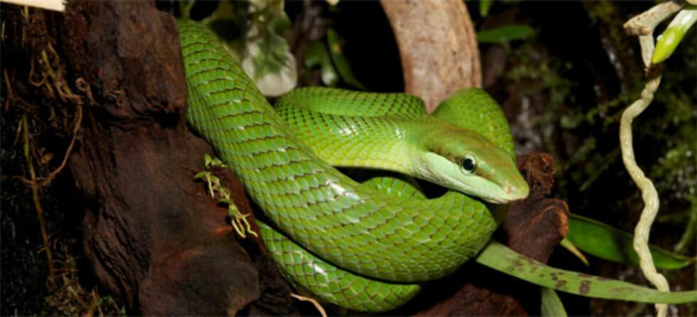 Slange i Reptilparken i Oslo
