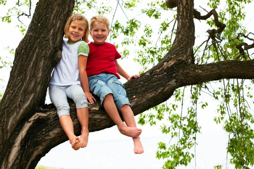 VIL HA FORBUD MOT DETTE: Noen foreldre mener det bør være forbudt å klatre i trær i barnehagen. Foto: Shutterstock.com ©