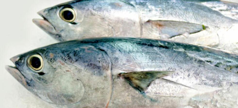 Fisk kan redusere risiko for astma.  Foto: Istockphoto.com ©