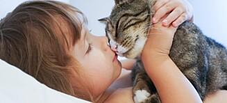 Dette må du tenke på før du anskaffer kjæledyr
