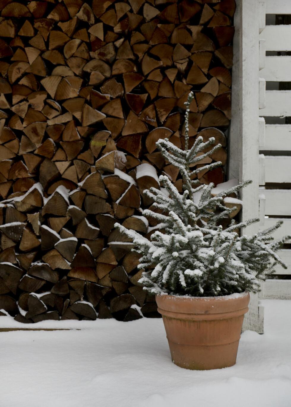 HEL VED: Det er ikke dumt med en helvegg med ved når kulden setter inn.  Foto: Ina Agency