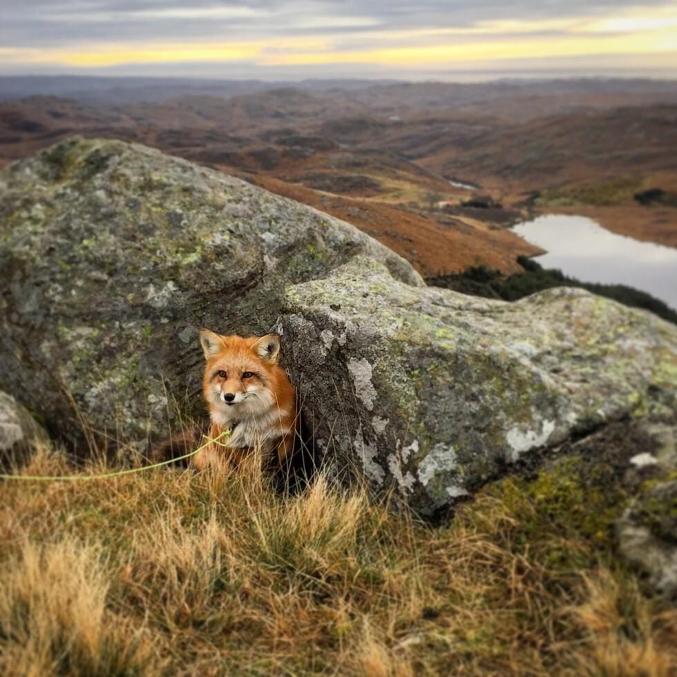 UT PÅ TUR: Ayla er glad i å gå tur på fjellet.  Foto: Privat