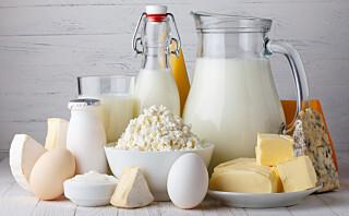 Glad i ost, kesam, melk og yoghurt?