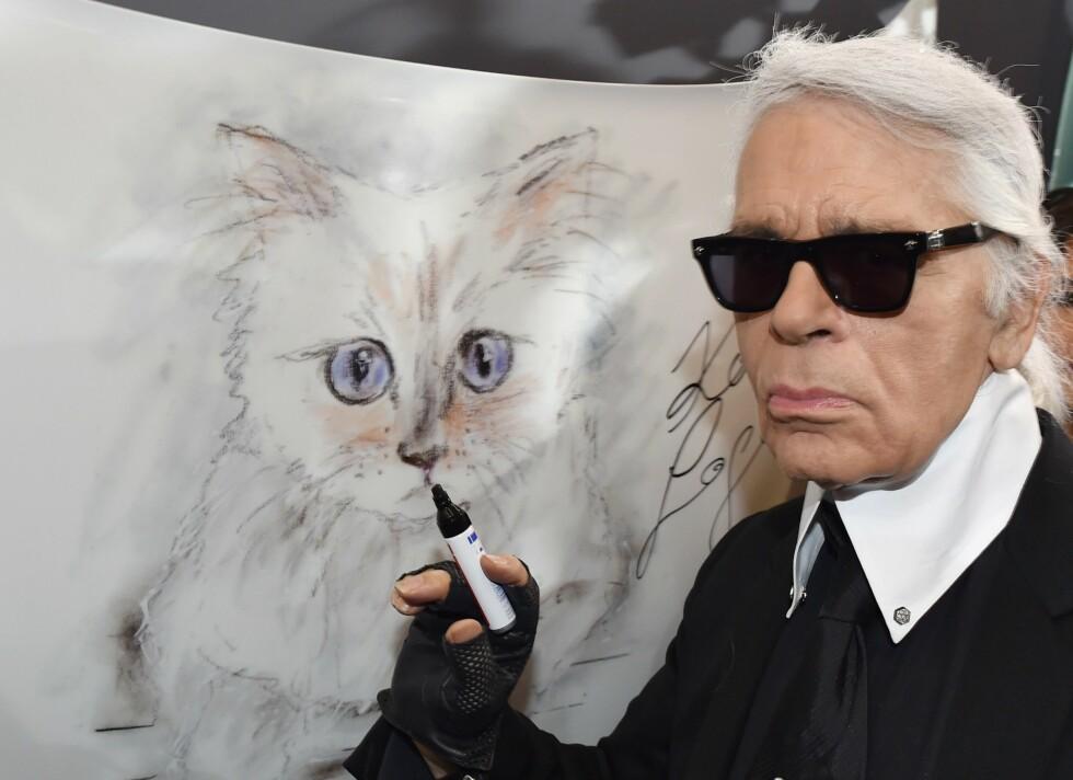 CHOUPETTE: Karl Lagerfeld tok rett og slett katten sin fra en venn. Foto: Afp
