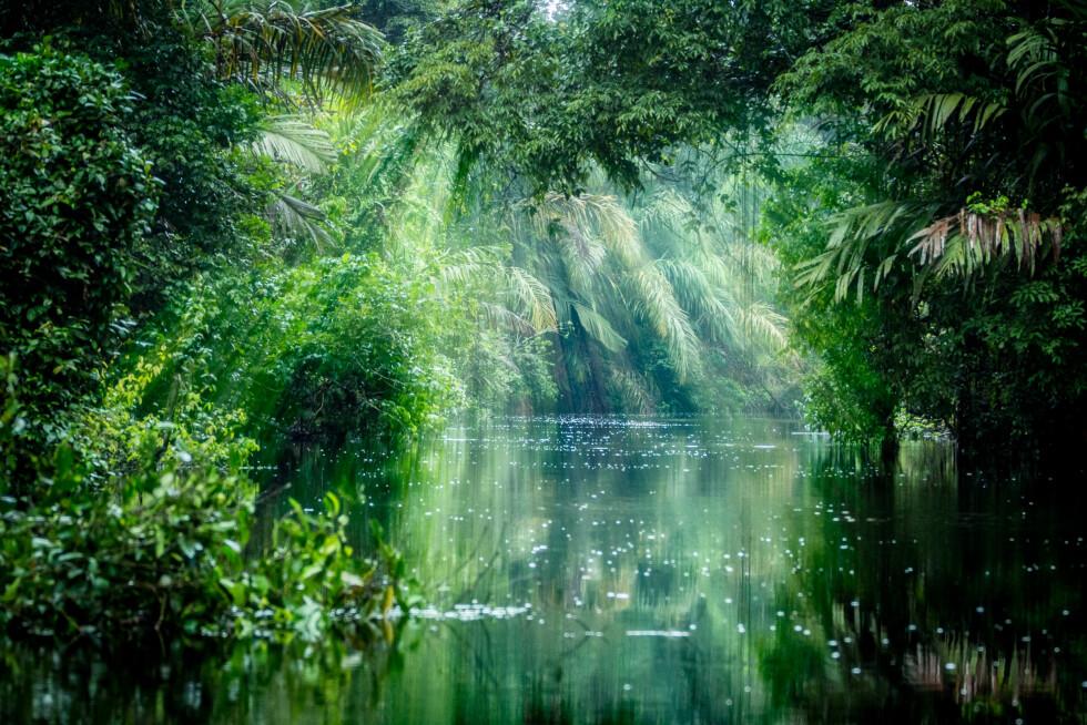 AMAZONAS: Den gigantiske regnskogen blir stadig mindre og mindre. Foto: Shutterstock / ronnybas