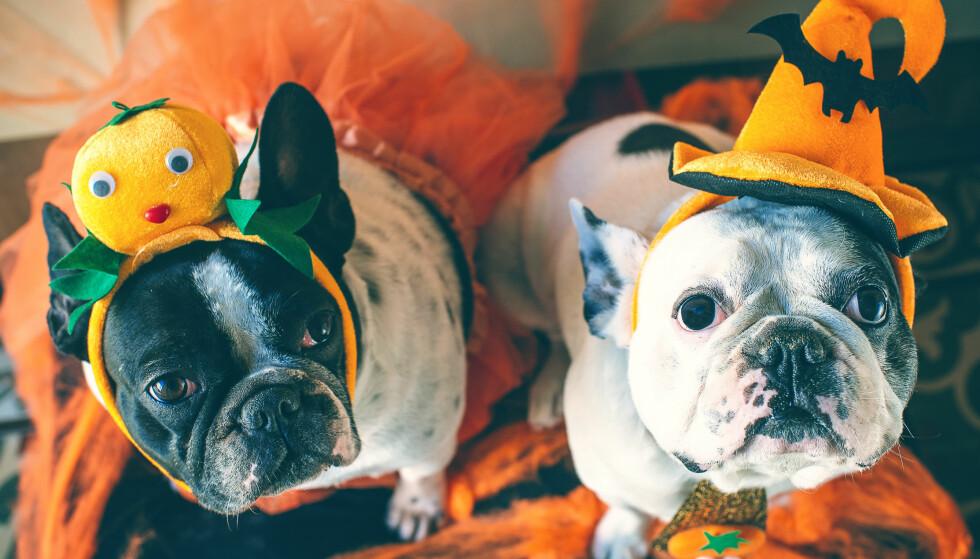 Derfor feirer vi Halloween!