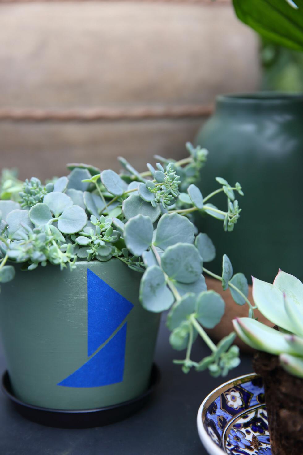 NYTT LIV TIL GAMLE POTTER: Har du en samling av gamle potter som er modne for en oppdatering? Mal dem med matt, vannavstøtende lakk og klipp til klistremerker for å gi dem et grafisk element. Tenk på fargekombinasjoner som matcher plantene du skal sette i pottene. Den fine, grålige sedumen passer perfekt til litt skitne grønntoner. Sedum fra Mustang Sally (kr 125). Foto: Krista Elvheim