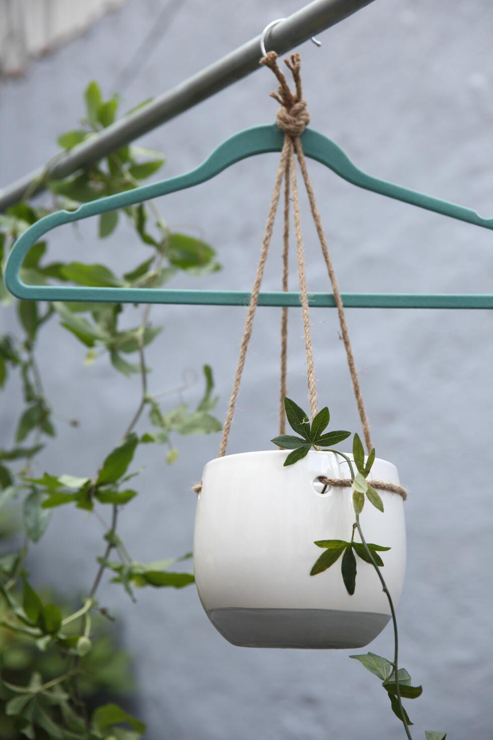 HENG DET OPP: Kleshengere og klesstativ kan brukes som klatrestativ til lekende klatreplanter. Fest hengepotter i kleshengere, og hekt dem på et stativ. Snart vil du se at det gror! Passiflora er en nydelig sommerplante som klatrer villig og får vakre blomster i blått og hvitt. Hengepotte fra Mustang Sally og kleshenger fra Søstrene Grene. Foto: Krista Elvheim