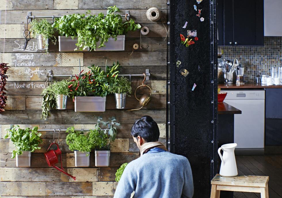 SANSELIG I HØYDEN: La utekjøkkenet få et løft, bokstavelig talt, og bygg en vegg med plass til både redskaper og alle de urtene du bruker mest. Tenk deg å lage en deilig sommersalat ved denne veggen! Alle produkter er fra Ikea.  Foto: Krista Elvheim