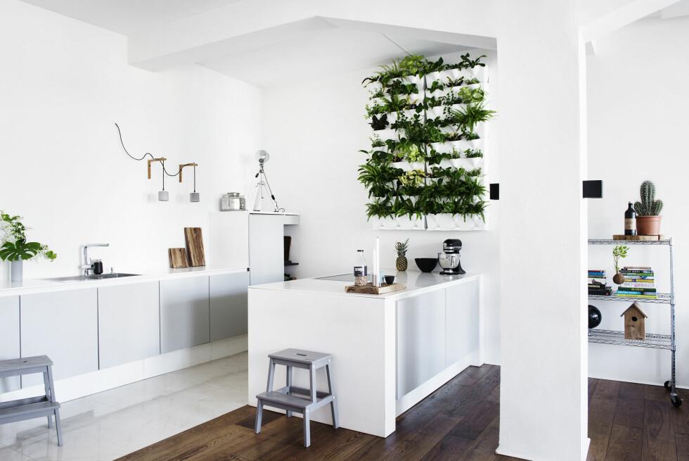 VAKRE PLANTER: Skamlene fra Ikea er malt grå. Planteveggen fra Minigarden er fylt med forskjellige vakre stueplanter. Den kan kjøpes hos Greenify. Lampe fra Lauritz. Skjærefjølene er fra Scanteak, og stålbeholderen er til olivenolje. Denne stilen kopierer du med Ikeamoduler, med et ekstra lag matt lakk eller maling, i en plassbygget ramme fra snekker. Foto: Gyrithe Lemche