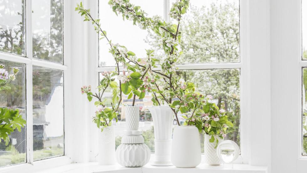 VÅR I VINDUSKARMEN: Miks av vakre vaser, fra venstre sylinderformet, 18 cm (kr 635) og mønstret, 27 cm  (kr 1455, begge fra, begge fra Thora Finnsdottir), antikk vase, 18 cm (kr 855, Royal Copenhagen), liten vase fra Ditte Fischer (kr 425, luxoliving.dk), smal vase, 12 cm (kr 495) og glasskule (kr 320, begge fra Seasons by Sidselz).  Foto: Fredrikke Heiberg