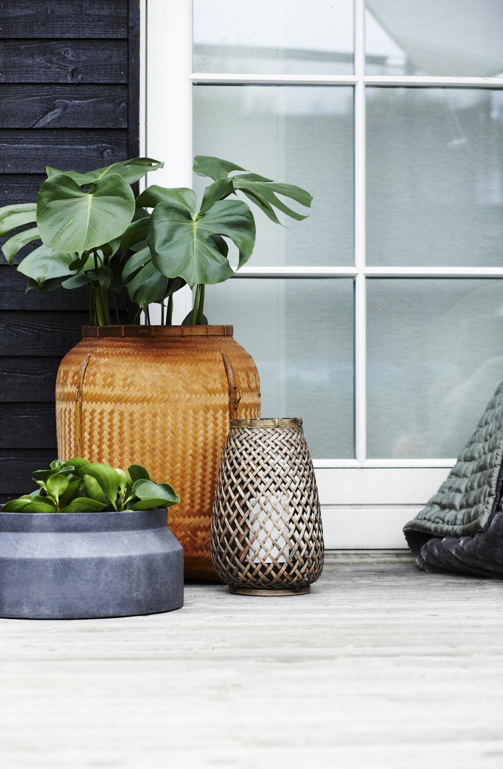 GRØNT OG FRODIG: Grønne planter er et må-ha på terrassen. Jobb gjerne med stylingen av dem, så får du litt mer din egen stil. Varier pottene, både i størrelse, form og materialer, og bland også grønne og blomstrende planter.  Foto: Mette Wotkjær