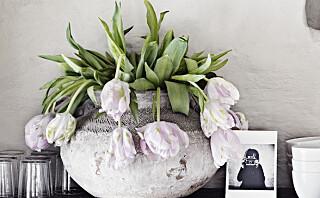 Blomstene som skaper sommerstemning