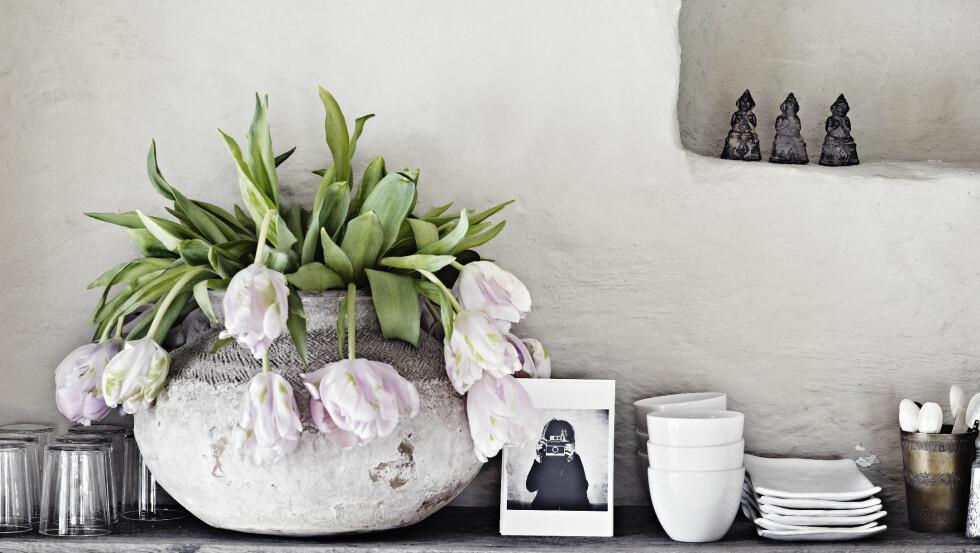 SISTE VERS: Se så vakre tulipaner kan være på sine siste dager! Kast dem endelig ikke av gammel vane selv om de begynner å henge med hodet, men se det vakre i hele syklusen. Alt de trenger mot slutten, er kanskje en ekstra klipp av stilkene.   Foto: Sara Svenningrud