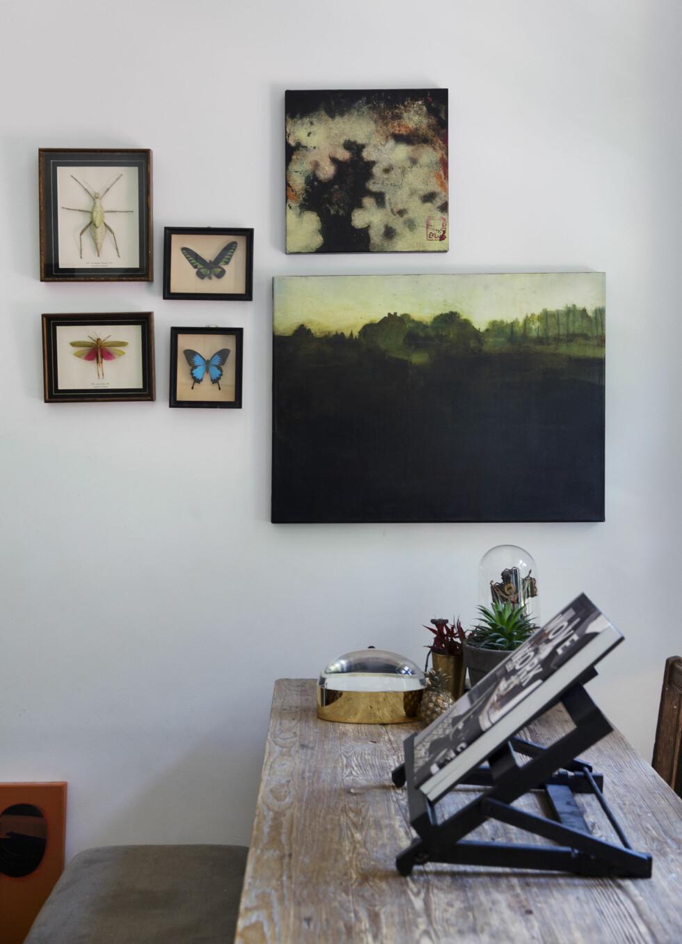 EGEN KUNST: Bildene på veggen er Eva Christins egne, sammen med kjære insekter og dyr som hun har samlet på siden hun var 15.  Foto: Yvonne Wilhelmsen