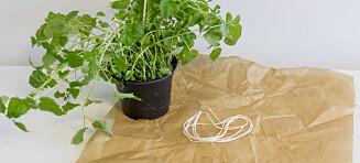 Trikset som gjør urteplanten litt kulere på kjøkkenbenken
