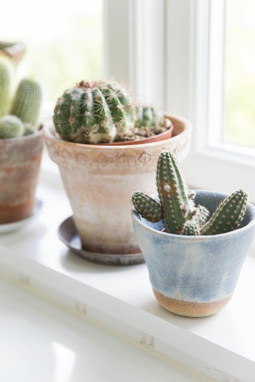 PRAKTISK MED KAKTUS: Hvis man ikke har grønne fingre, men liker å ha det grønt rundt seg, da er kaktuser en opplagt løsning. De er veldig dekorative og krever nesten ikke noe stell. Krukken med blå glasur er fra Studio Rov. Foto: Frederikke Heiberg