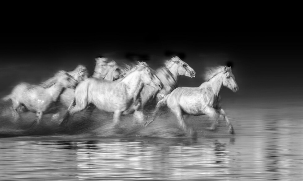 CAMARGUE-HESTER: - Jeg er ingen hestejente av natur, men Camargue-hestene fascinerer meg, forteller Charlotte.  Foto: Charlotte Spetalen