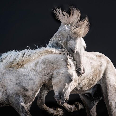 VILLE HESTER: Camargue-hestene lever tilnærmet vilt i det sørøstlige Provence-området Camargue i Frankrike. Foto: Charlotte Spetalen