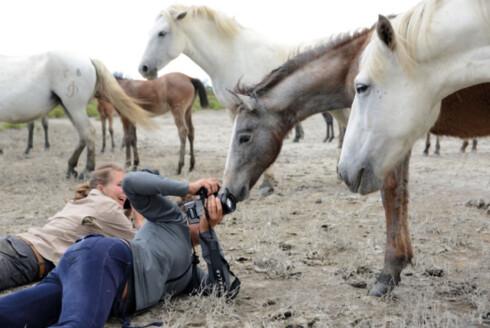 EN KUNST Å FOTOGRAFERE: Å fotografere Camargue-hestene i deres naturlige habitat kan være en sølete affære.  Foto: Privat