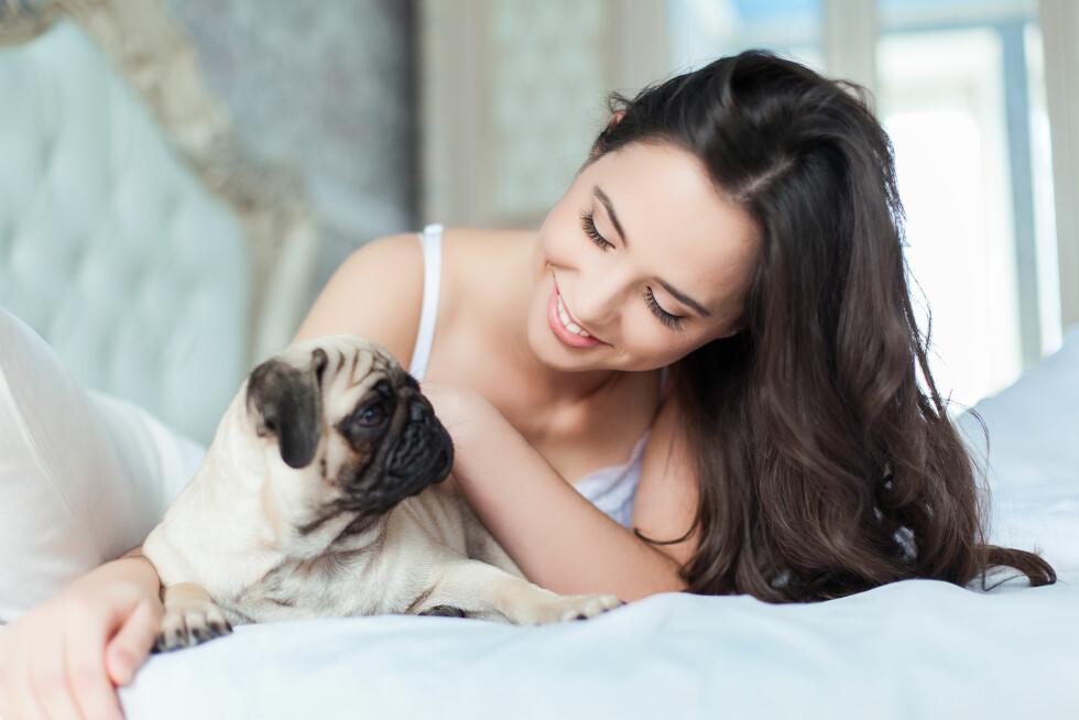 TROFÉ: De små, søte veskehundene har lenge vært en trend blant unge kvinner. Foto: Shutterstock / SunKids