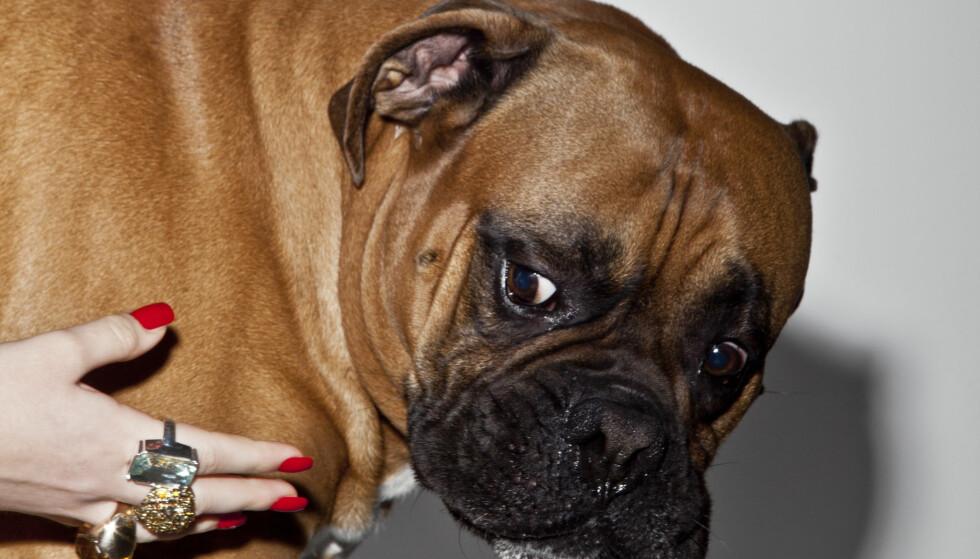 Dette avslører hunden din om deg: - Man sier jo gjerne «som hund, så eier»