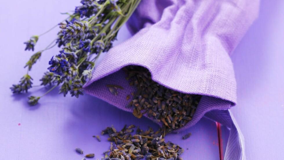 AVSLAPPENDE LAVENDEL: Lavendelduften har en beroligende effekt, har forskning vist.  Foto: StockFood