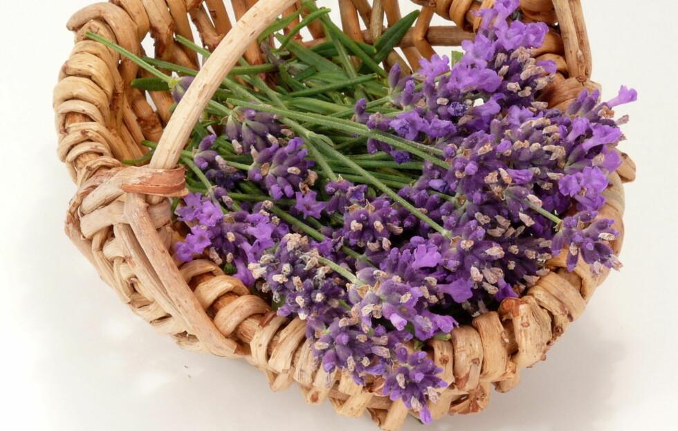 HJELPER MOT MYE: Lavendel kan brukes til mye mer enn bare som godlukt. For eksempel mot oppblåst mage og flass.  Foto: Thinkstock.com