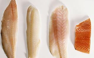 Fisken som er proppfull av protein