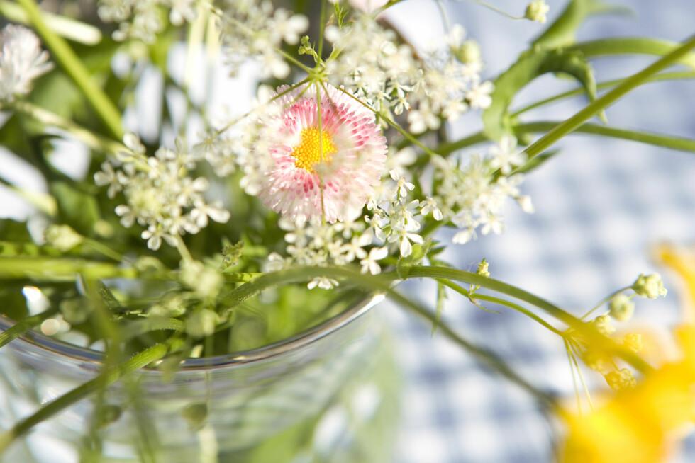 FRISKE BLOMSTER: Det er lite som slår en fersk bukett med blomster på bordet til helgen. Med enkle grep kan du nyte de helt frem til neste helg. Foto: Scanpix