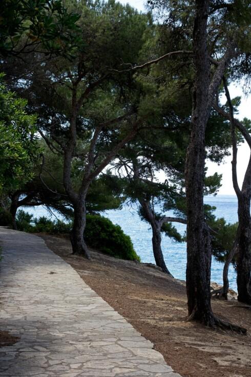 Fin gåtur: Smuglerstien går rundt pynten på halvøya Cap Ferrat. Foto: Jytte Boch