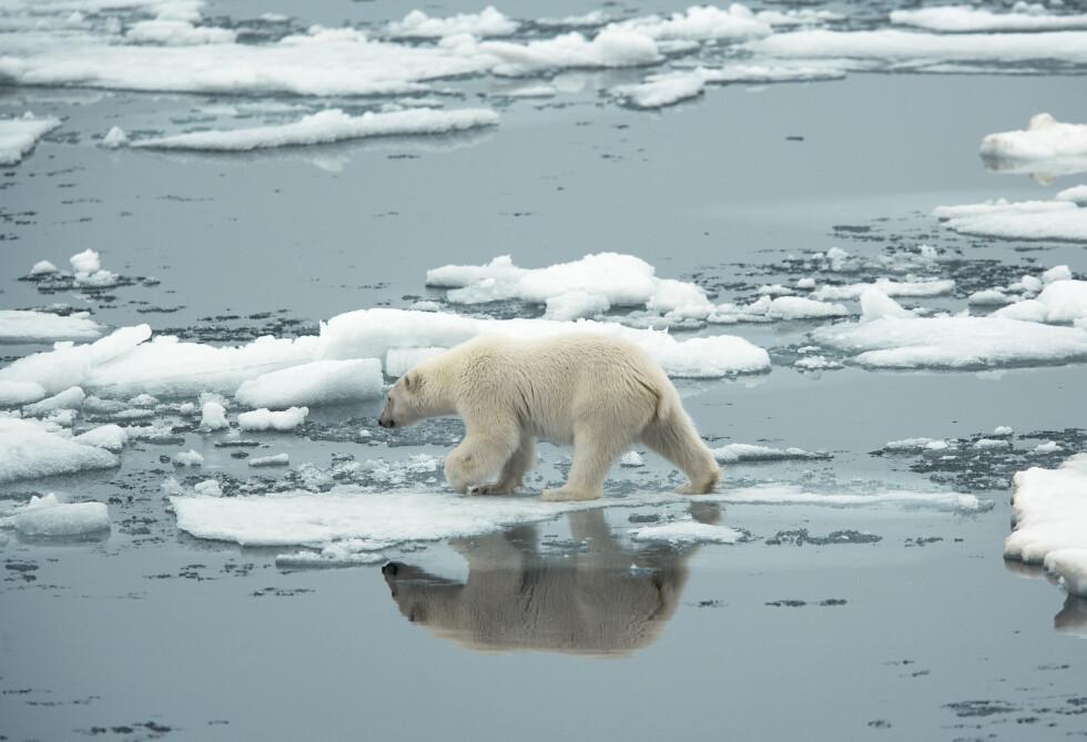 ISEN SMELTER: Dette hjerteskjærende bilder viser en av klimaendringene vi har i verden. Foto: Scanpix
