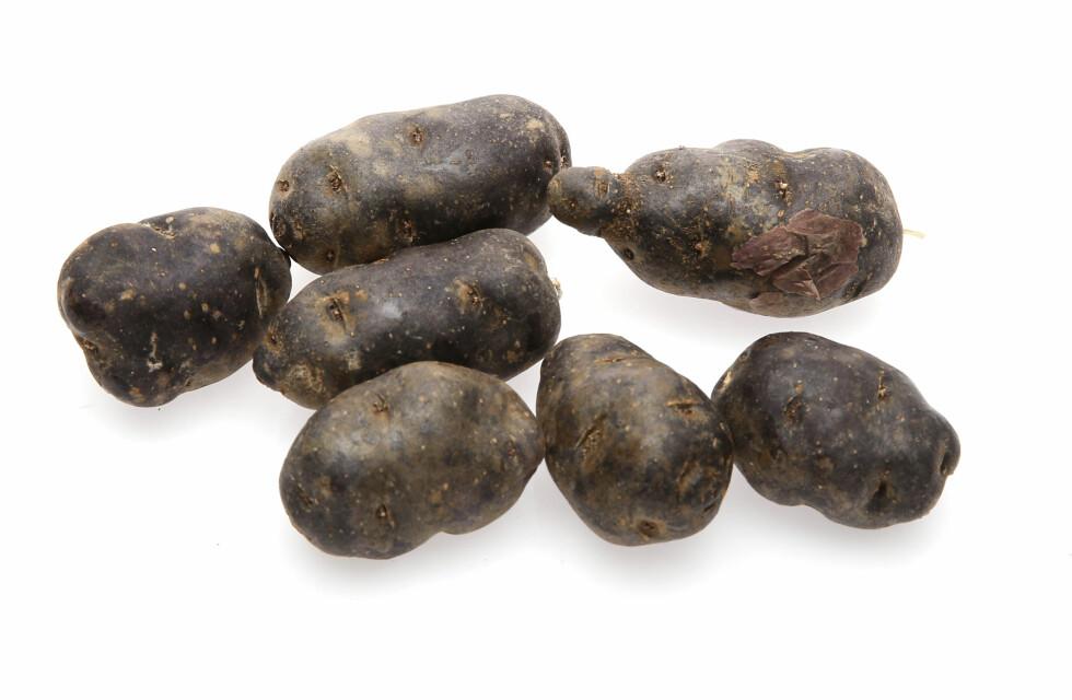 EN SJELDEN BLÅ SKATT: Fargestoffene som gjør Blå Kongo-poteten blå, er stappfull av antioksidanter. Foto: VG