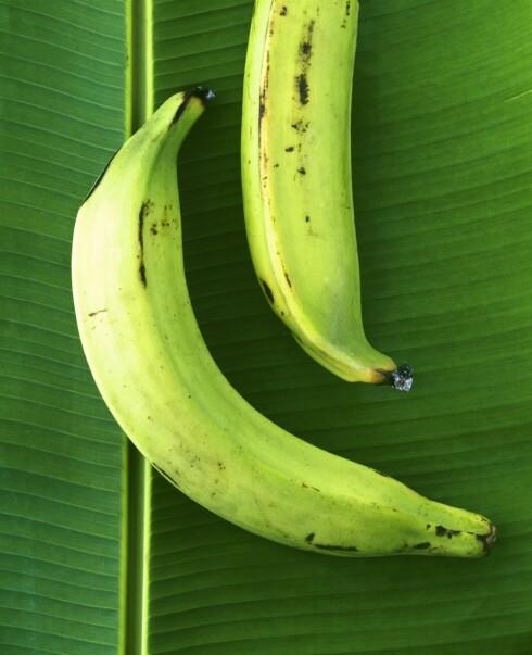 MINDRE KARBS: Det er færre karbohydrater i grønn banan.  Foto: Scanpix