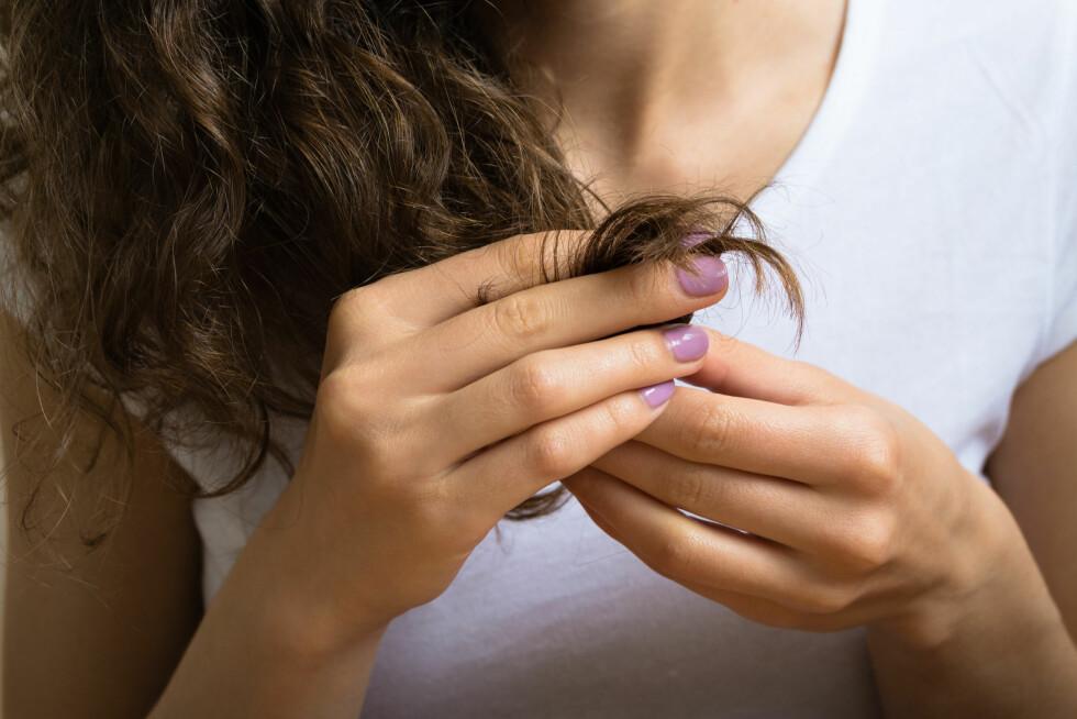 TØRT HÅR: Dersom du ikke bruker et varmebeskyttende produkt i håret før du føner det, vil håret bli slitt og tørt. FOTO: progressman - Fotolia