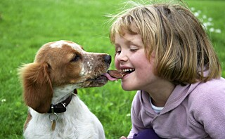 5 matvarer som kan være livsfarlig for kjæledyr