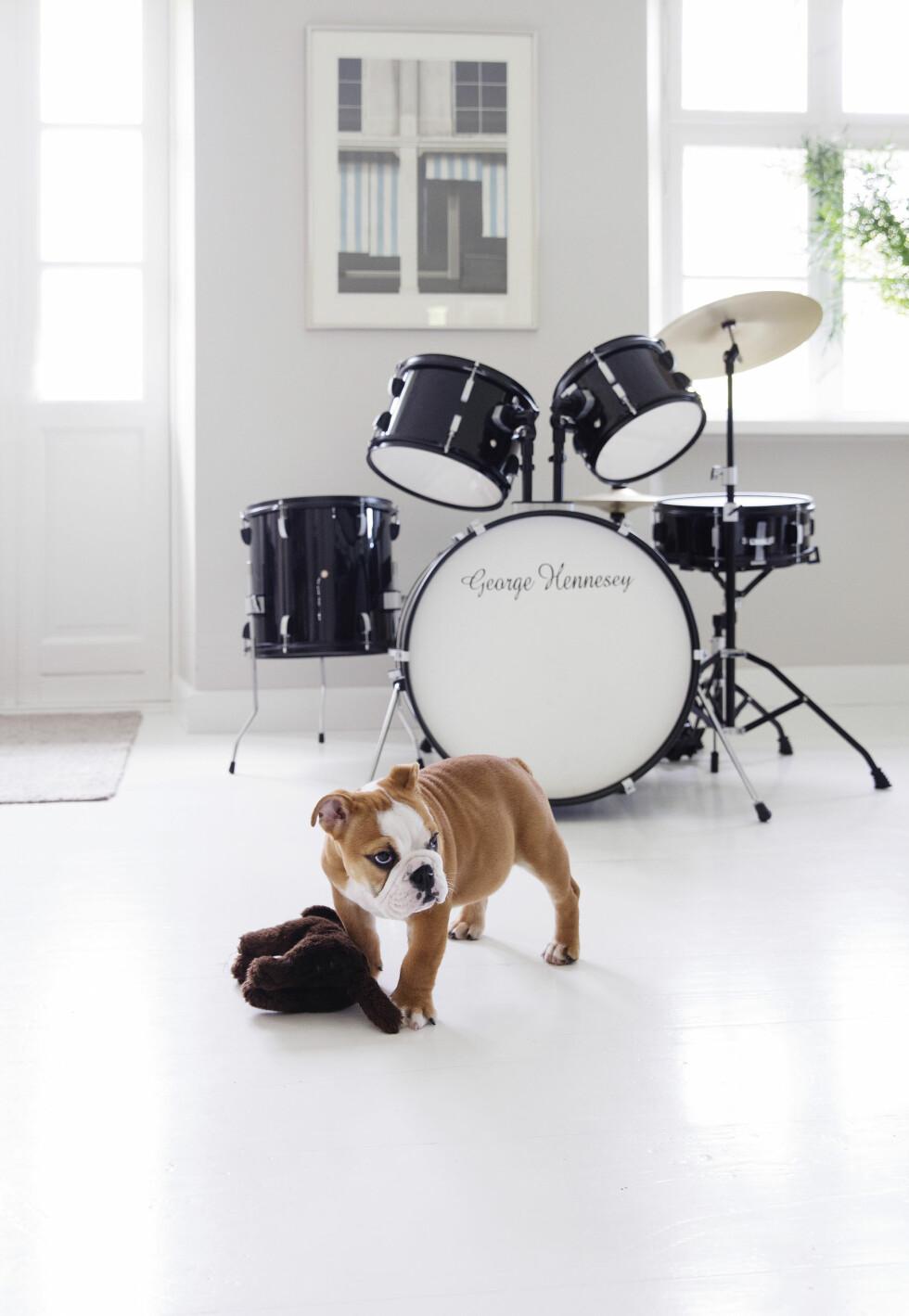 STÅR FREMME: Trommesettet tilhører Tines sønn, og får stå midt i stuen så han skal få lyst til å spille. – Jeg synes det er så hyggelig å høre når han spiller, sier hun. Den engelske bulldogen Belle samtykker. Foto: Yvonne Wilhelmsen