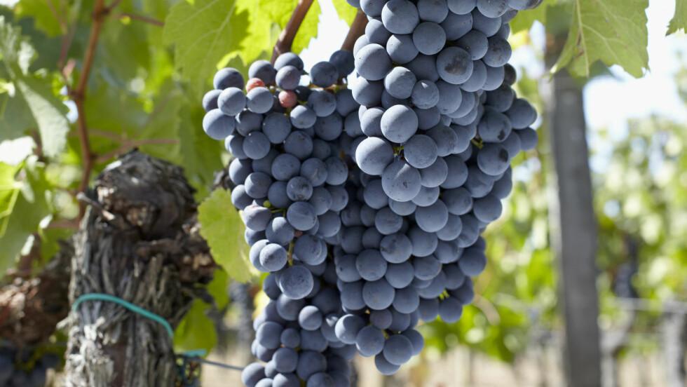 BLI EN VINKJENNER: Det viktigste når du velger vin er din egen smak. Det finnes faktisk ingen fasit.  Foto: Scanpix