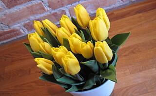 Slik får du tulipanene til å holde lenger
