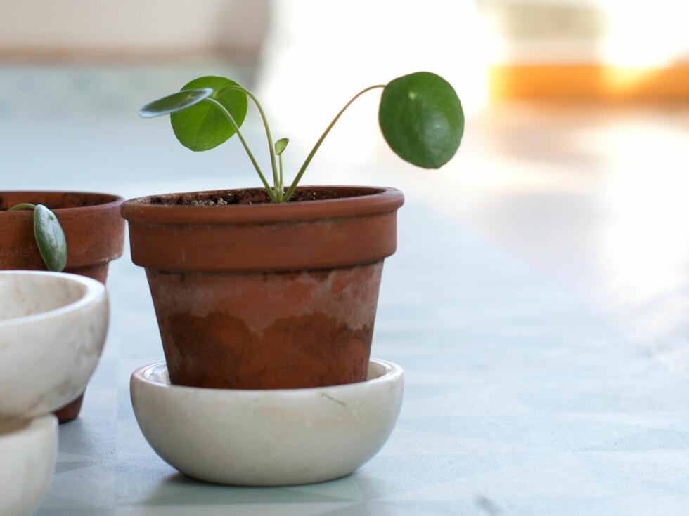 Tips! Det er flere måter å la frø, planter og knoller formere seg på. Men fellesnevneren er vann, lys og god jord! Foto: Krista Elvheim