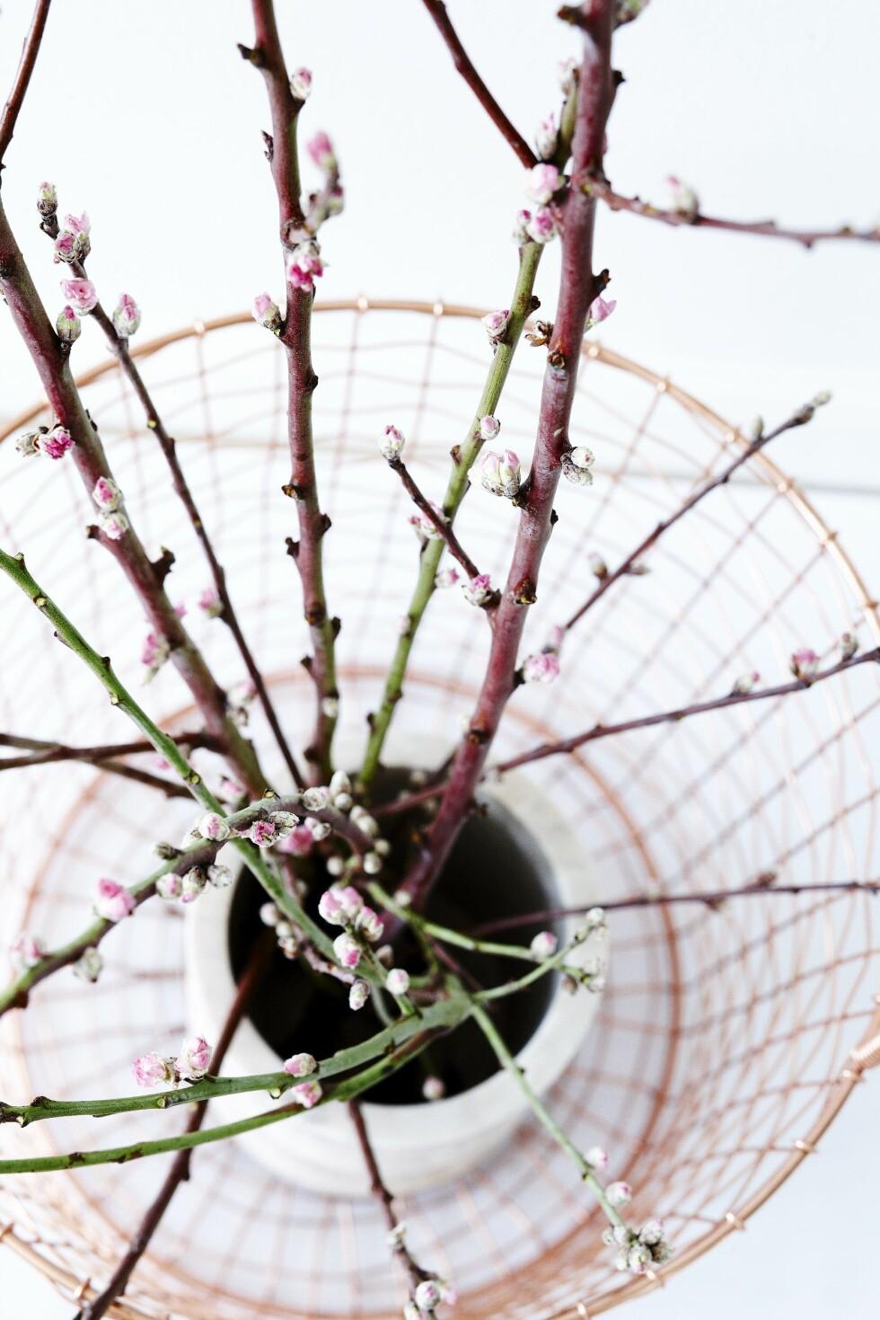 Kvister med små knopper på gir deg en liten touch av vår inne.  Foto: Mette Wotkjær
