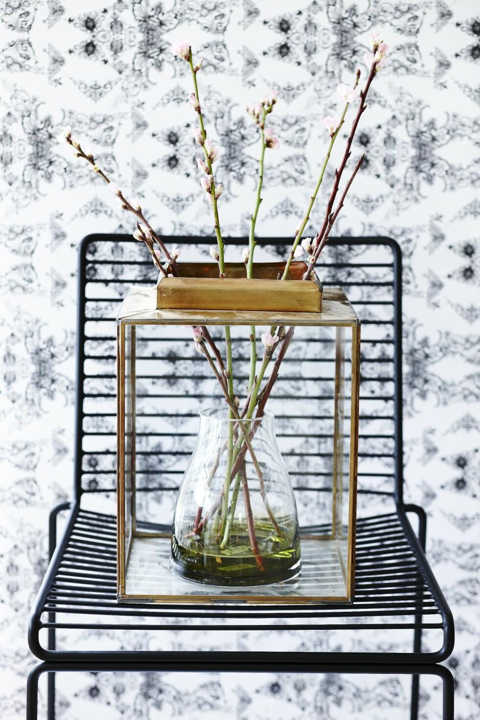 Har du en lykt stående, kan du bruke den til å lage et drivhus.  Foto: Mette Wotkjær