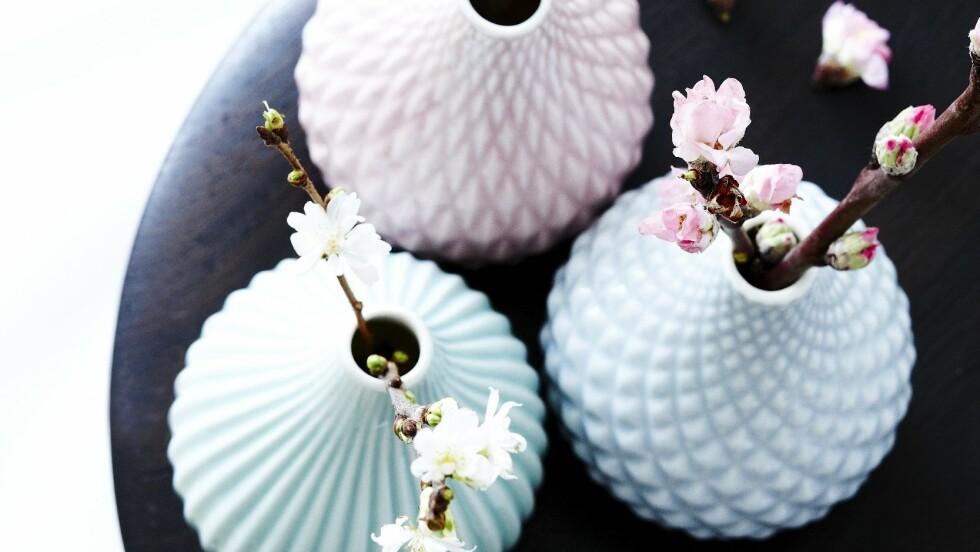 MED KVISTER: Ta med deg våren inn og pynt med vakre, spirende kvister.  Foto: Mette Wotkjær
