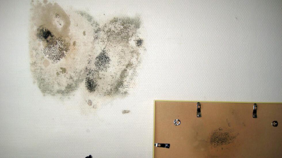 BLE SYK: De som brukte dette rommet ble syke, men fant ikke årsaken før bildet ble tatt ned fra veggen, ifølge Gustavsen. Bildet er tatt for noen år siden, men problemet er like aktuelt den dag i dag.  Foto: Kai Gustavsen/NAAF