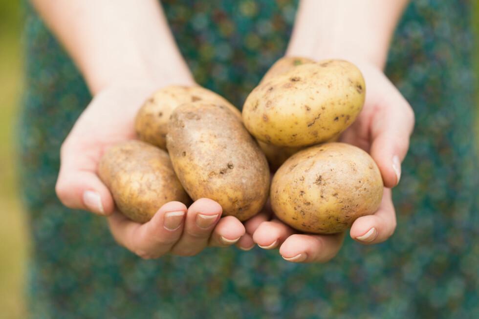 IKKE BARE KARBOHYDRATER: Poteten er langt mer enn bare karbohydrater, det er nemlig en verdifull matvare med mange gode næringsstoffer som kroppen trenger. Foto: WavebreakMediaMicro - Fotolia